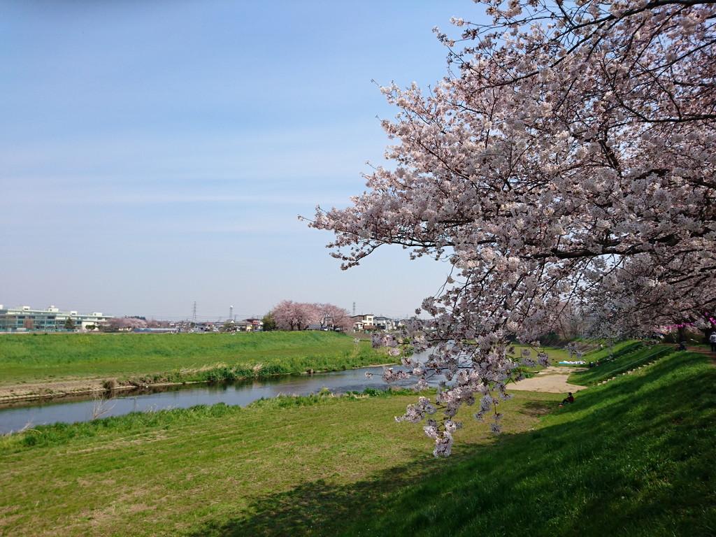 花見 (1)