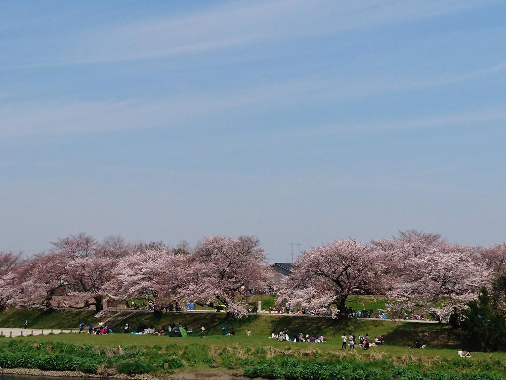 花見 (2)